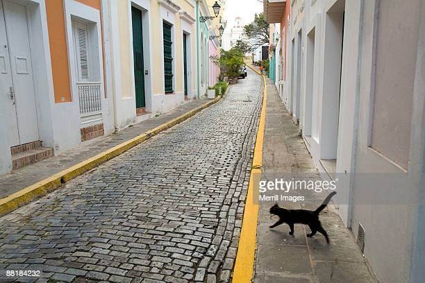 Alley with Cobblestone and black cat