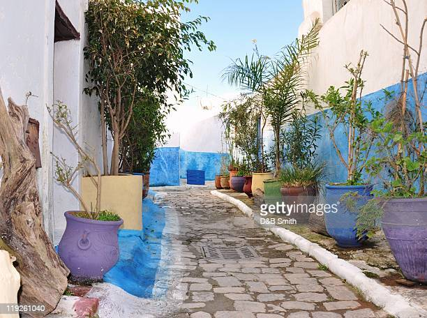 Alleyway and potted plants, Oudayas, Rabat