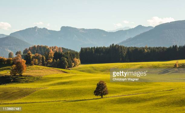 allgäu - sorglos stock pictures, royalty-free photos & images