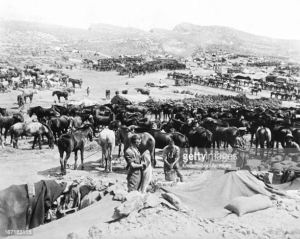 Allied calvary units in the Dardanelles Campaign against Turkey Dardanelles Turkey 1915