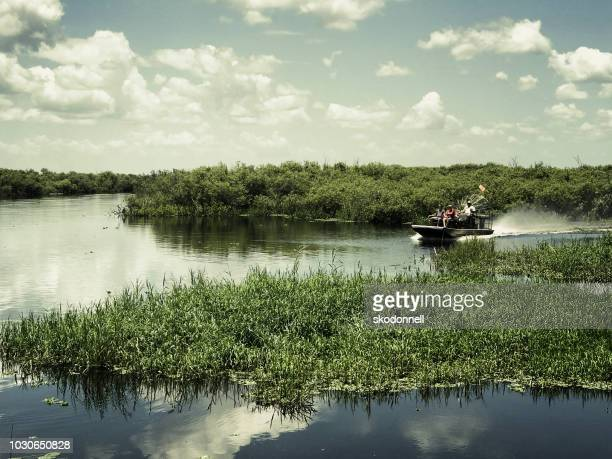 alligator airboat ride in florida - everglades national park stock pictures, royalty-free photos & images