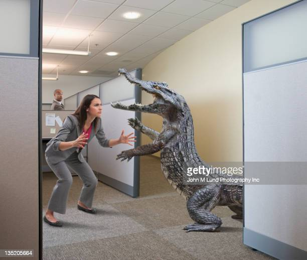 alligator attacking businesswoman in office cubicle - rivaliteit stockfoto's en -beelden