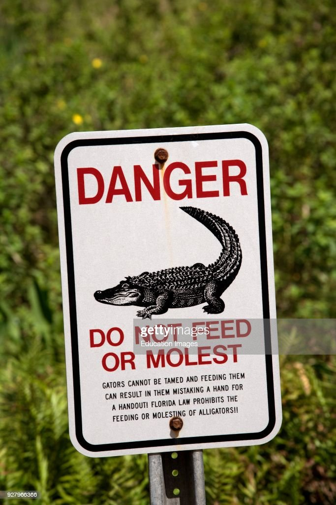 alligator danger and warning sign florida usa do not feed or molest