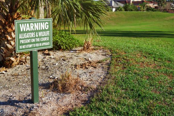 Alligator danger and warning sign Florida, USA