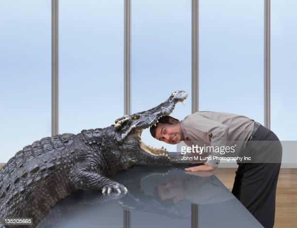 cocodrilo de comer caucásico ejecutivo - maltrato animal fotografías e imágenes de stock