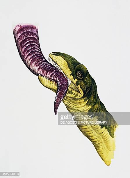 Allosauro Allosauridae Late Jurassic Artwork by Edwina Goldstone