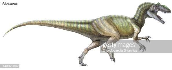 Allosaurus , A Large, Fearsome Predatorial Dinosaur From ...