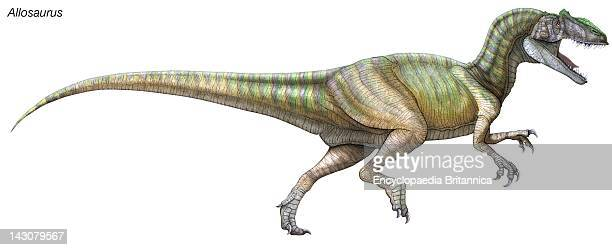 Allosaurus A Large Fearsome Predatorial Dinosaur From The Late Jurassic Period