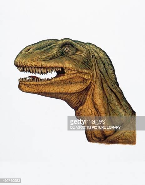 Allosaurus fragilis, Allosauridae, Late Jurassic ...