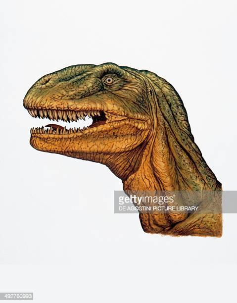 Allosaurus fragilis Allosauridae Late Jurassic Illustration Detail