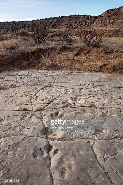 Allosaurus Theropod dinosaur tracks Purgatoire River Colorado vertical