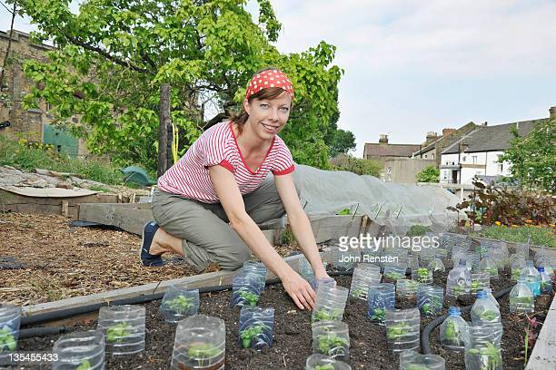 allotment gardening and urban vegetable growing