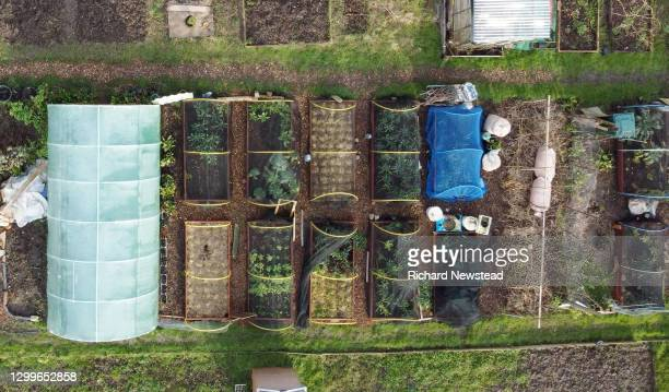 allotment - elevated view stock pictures, royalty-free photos & images