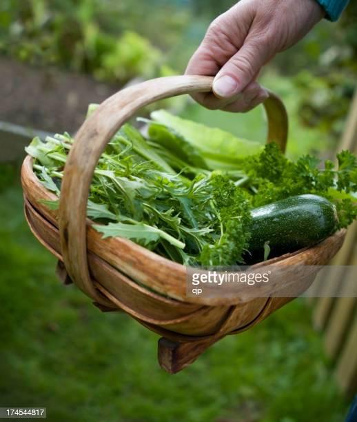 Allotment Vegetable Harvest