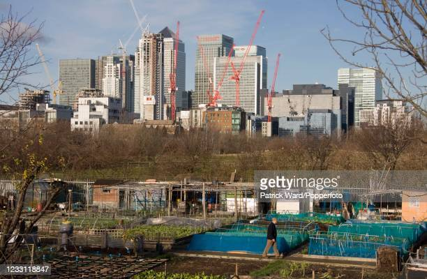 Allotments at Mudchute Farm and Park, a 32-acre local Nature Reserve and the largest urban farm in Europe, on the Isle of Dogs in the London Borough...