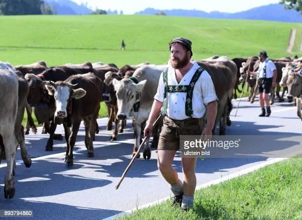 Almabtrieb Viehscheid in Maierhoefen im Allgaeu