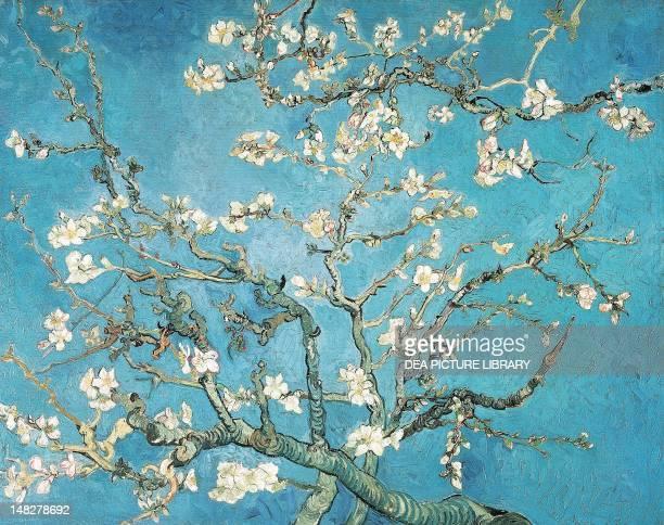 Almond branches in bloom by Vincent van Gogh . ; Amsterdam, Van Gogh Museum.