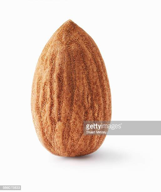 Almond upright on white background