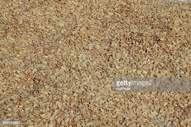 Almonds drying in the sun at the argan oil cooperative in Morocco Africa on 17 December 2016 These almonds will be combined with argan oil making...