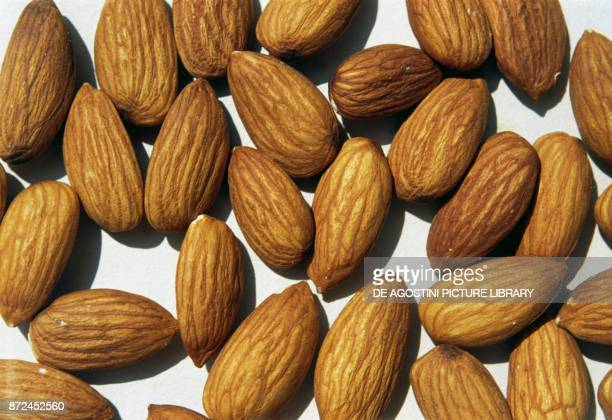 Almonds edible seeds of almond Rosaceae