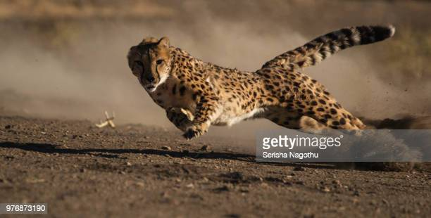 almost there - sport involving animals stock pictures, royalty-free photos & images
