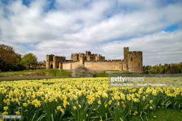alnwick castle - alnwick stock pictures, royalty-free photos & images