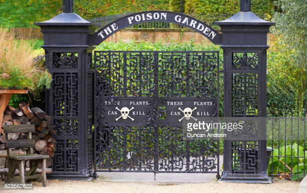 alnwick garden - alnwick stock pictures, royalty-free photos & images