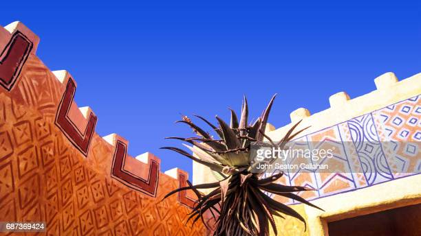 aloe plant - eastern cape stock pictures, royalty-free photos & images