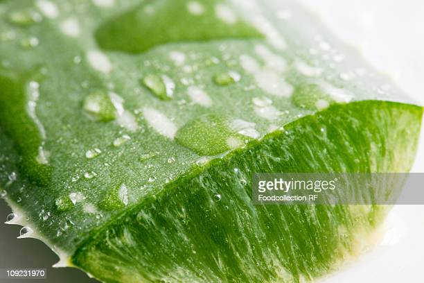 Aloe vera leaf with water drops, close-up