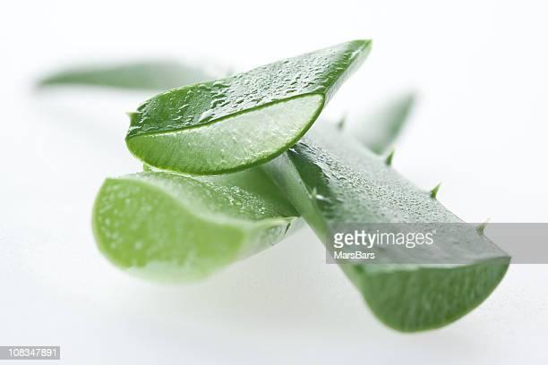 macro di Aloe vera