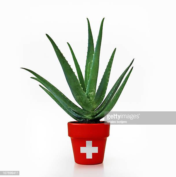 aloe vera, medicinal plant - pot plant stock pictures, royalty-free photos & images