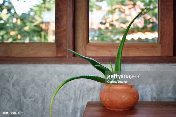 aloe vera on a wooden table - aloe vera plant stock pictures, royalty-free photos & images