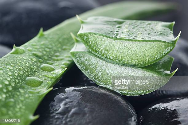 Aloe vera on dark background