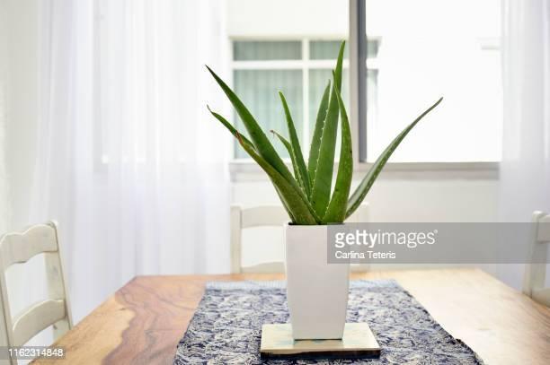 aloe vera plant on a beautiful wood table - aloe vera plant photos et images de collection