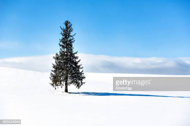 Alone Christmas Tree with Snow Hill in Blue Sky Day at Biei-Cho,Hokkaido Japan