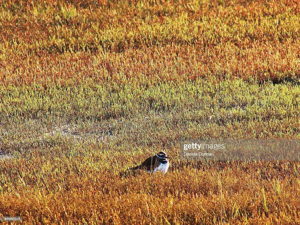 Alone in nature : Stock-Foto