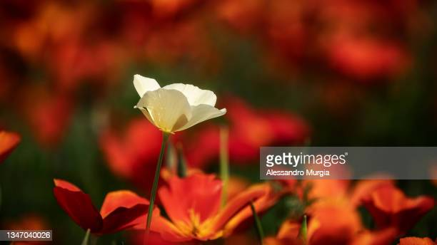 alone in the crowd - flower part stock pictures, royalty-free photos & images