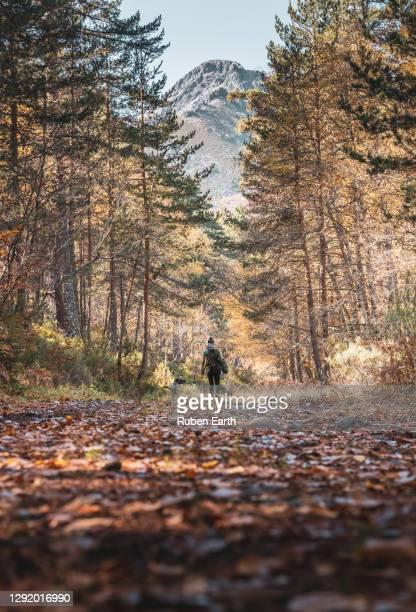 alone in the forest, a woman hiking in the mountains - comunidad autónoma de castilla y león fotografías e imágenes de stock