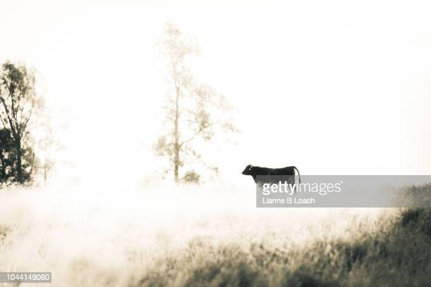 alone on the hill - lianne loach stock pictures, royalty-free photos & images