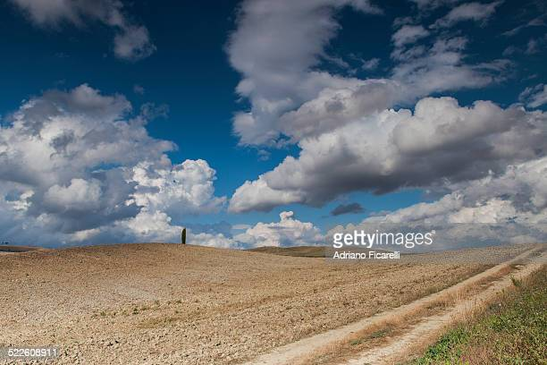 alone on the hill - san quirico d'orcia stock pictures, royalty-free photos & images