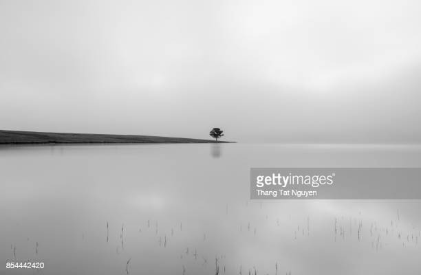 Alone pine tree by lake in morning mist - B&w image