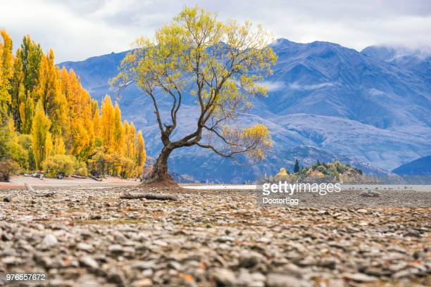 Alone Tree at Lake Wanaka , New Zealand in Autumn