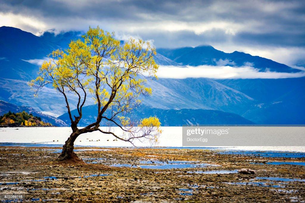 Alone Tree at Lake Wanaka : Stock Photo