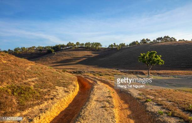 alone tree by road - neem tree stock pictures, royalty-free photos & images