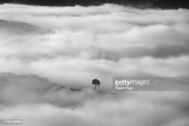 Alone tree in the cloud of valley