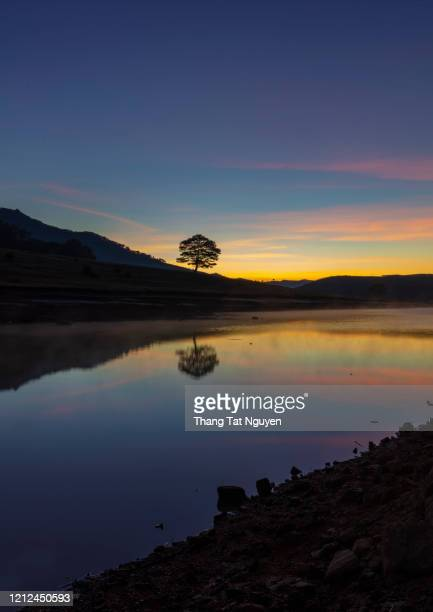 alone tree reflection on water by lake at dawn - golden hour stock pictures, royalty-free photos & images