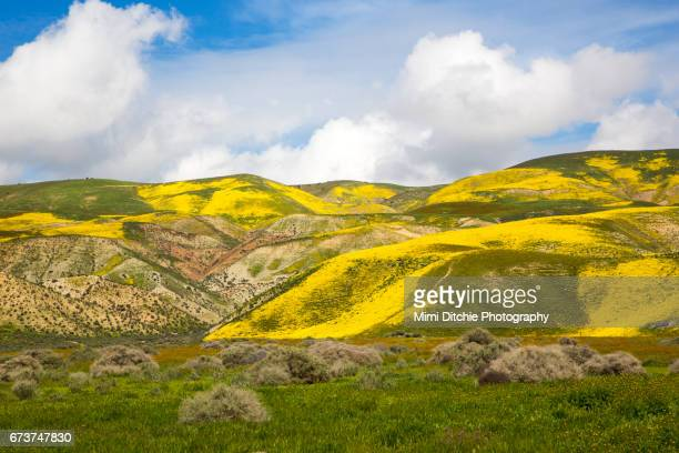 Along Highway 58 In The Carrizo Plain National Monument