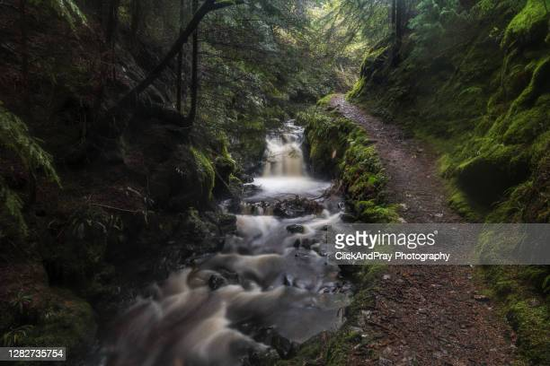 along the river bank - stream stock pictures, royalty-free photos & images