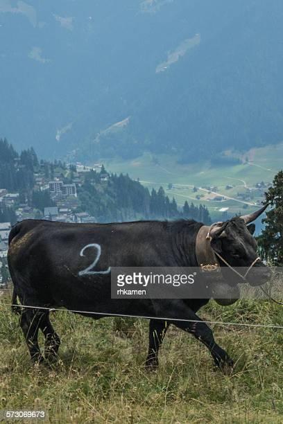Alp en Fete, Verbier, Valais, Switzerland