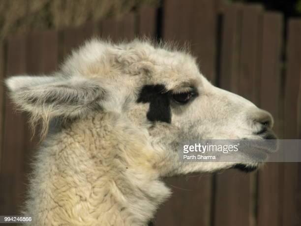 Alpaca says Hello World